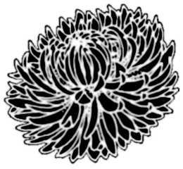 La symbolique du chrysanthème.