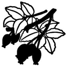 La symbolique du figuier.