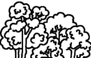 La symbolique de la forêt.