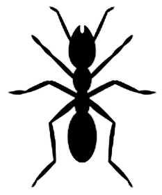 La symbolique de la fourmi.