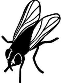 La symbolique de la mouche.