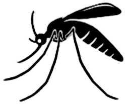 La symbolique du moustique.