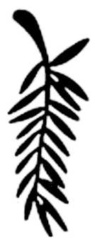 La symbolique de la palme.