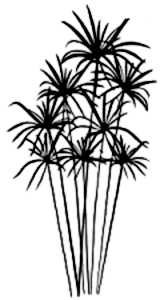 La symbolique du papyrus.