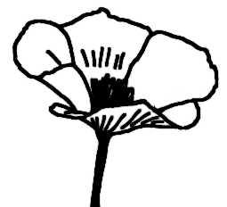La symbolique du pavot.
