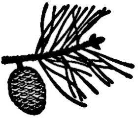 La symbolique du pin.