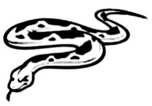 La symbolique du serpent Python.