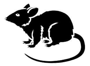 La symbolique du rat.