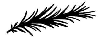 La symbolique du romarin.