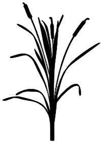 La symbolique du roseau.