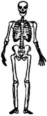 La symbolique du squelette.