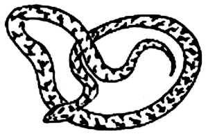 La symbolique de la vipère.